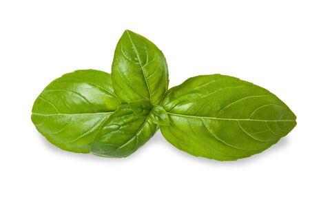 Basil leaves isolated on white photo