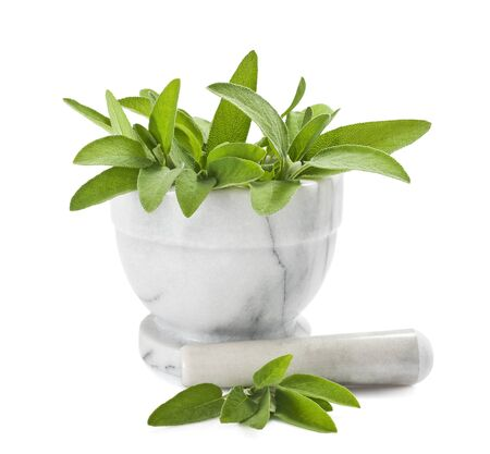salvia: Sage in a mortar isolated on white