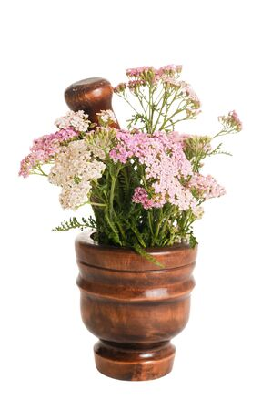 Yarrow in a mortar isolated on white photo