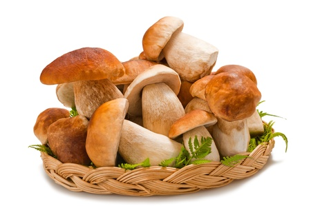 funghi: cesto porcini isolato su bianco