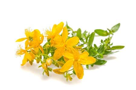 St John s wort isolated on white Stock Photo