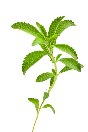 stevia rebaudiana leaves isolated on white Stock Photo