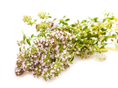 origanum: Wild thyme flowers isolated on white