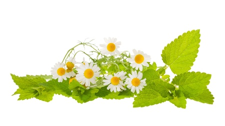 balm: chamomile and lemon balm isolated on white Stock Photo