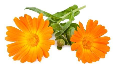 marigold: marigold flowers isolated on white Stock Photo