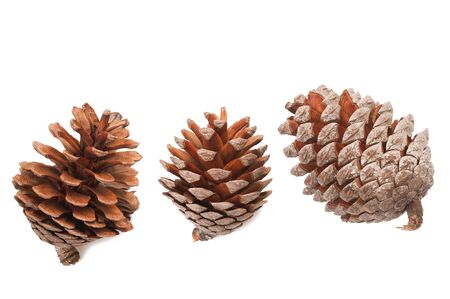 pinecone: Pine cones group isolated on white