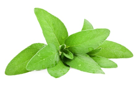 sage leaves wet isolated on white Stock Photo