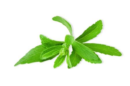 stevia rebaudiana isolated on white photo