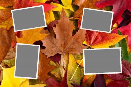 photo with empty space on leaves background photo