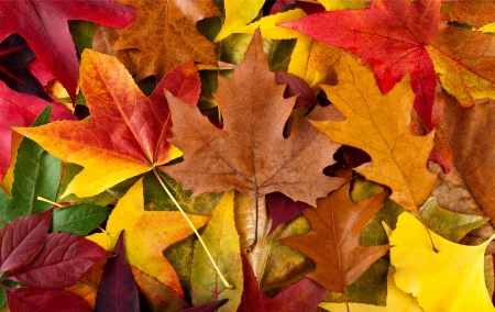 background autumnal with multicolored leaves photo