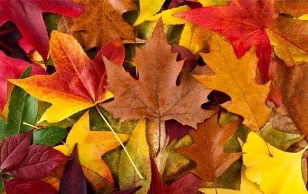 hojas secas: Fondo oto�al con hojas multicolores