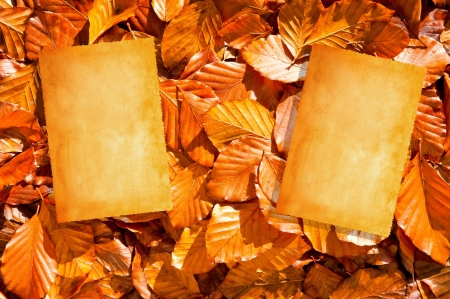 vintage parchement: Pictures on dry  leaves background