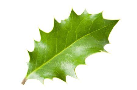 ilex aquifolium holly:  holly leaf isolated on white Stock Photo