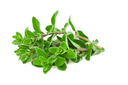 Fresh-picked marjoram isolated on white