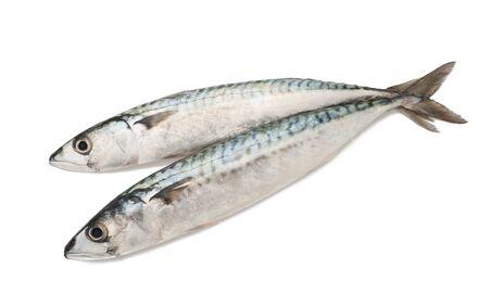 sardinas: dos caballas aislado en blanco Foto de archivo