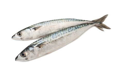 two mackerels isolated on white photo