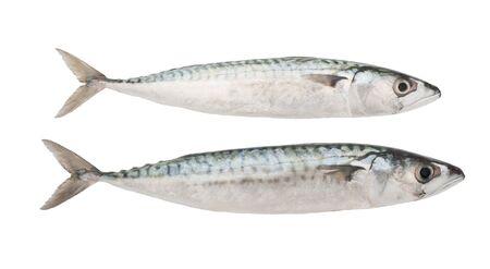 two mackerels isolated on white photo