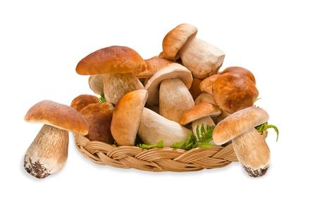 mycelium:  boletus basket isolated on white