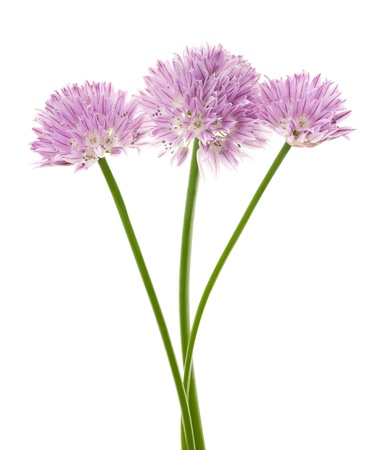flavoring: Chives flowers isolated on white
