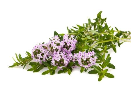 Savory fresh herb isolated on white background  Stock Photo