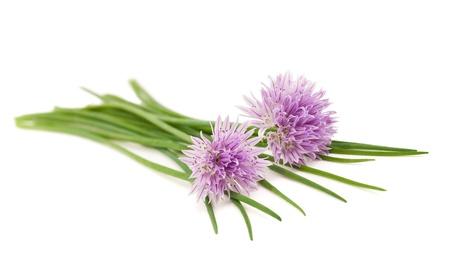 cebollin: Cebollino flores aisladas en blanco