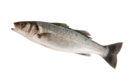 sea bass: Seabass isolated on white background