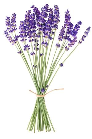 白い背景の上のラベンダーの花 写真素材