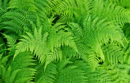 Green fresh fern background