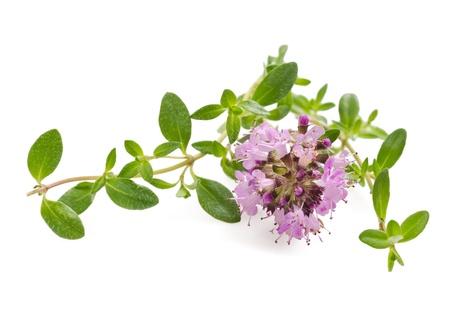 Tijm bloemen, aromatische kruid in bloei Stockfoto - 21016808