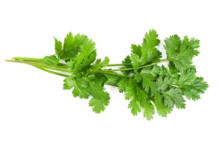 cilantro: Coriander bunch isolated on white