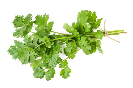 Coriander bunch isolated on white photo