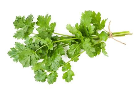 cilantro: Manojo de cilantro aislados en blanco