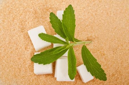 sweetener: cane sugar,white sugar and stevia Stock Photo