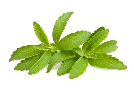 Stevia bladeren geïsoleerd op wit Stockfoto