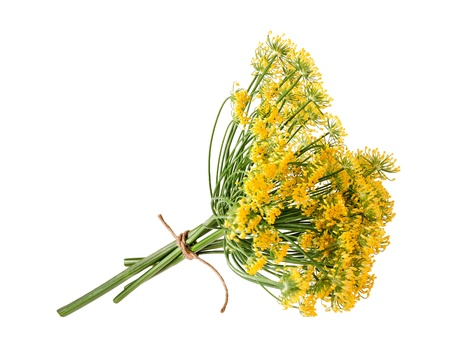 fennel: Wild fennel flowers isolated on white