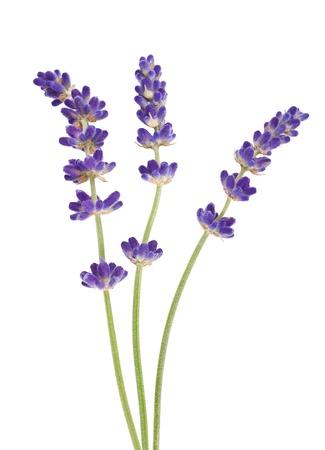 Lavendel bloemen geïsoleerd op wit