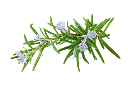 rosemary with flowers isolated on white Stock Photo