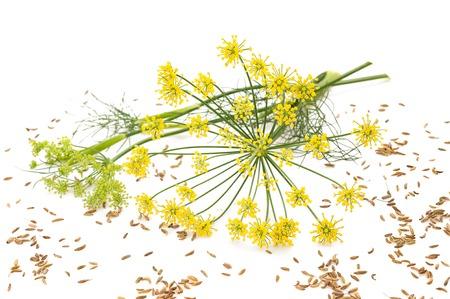 Bloemen en zaden van wilde venkel op wit wordt geïsoleerd Stockfoto