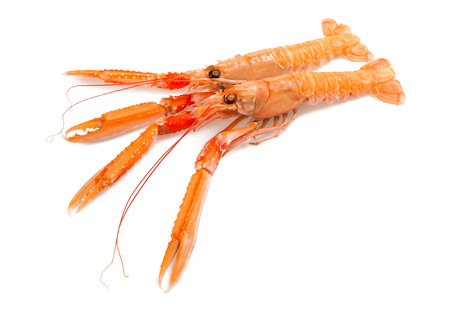 shellfish nephrops isolated on a white