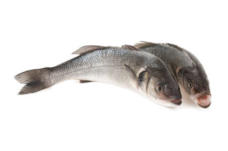 sea bass: Two Sea bass isolated on white background Stock Photo