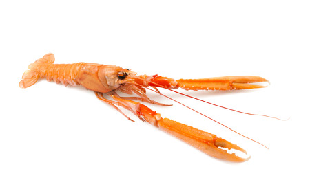 shellfish nephrops isolated on a white background