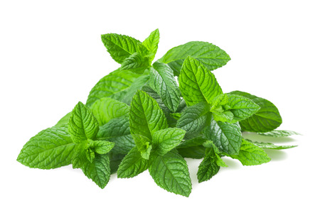 lemon balm: Fresh mint isolated on white background