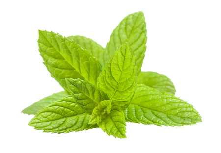 spearmint: mint sprig isolated on white background