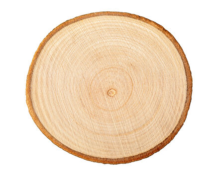 cross cut:  Cross section of tree trunk showing growth rings on white background