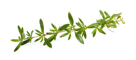 Savory sprig isolated on white background