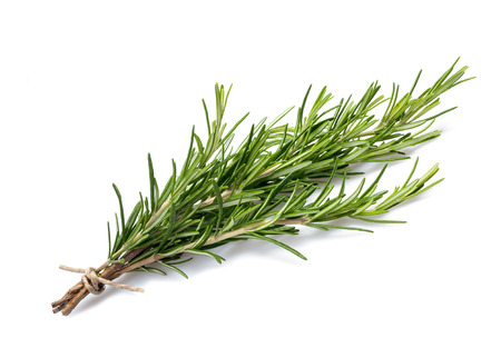 rosemary branch isolated on white