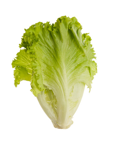 tuft: Lettuce tuft isolated on white background .Salad leafs