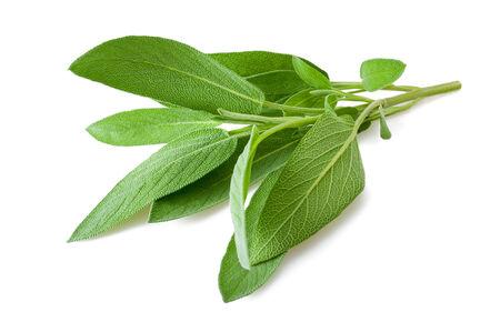 salvia: Sage sprig isolated on white background Stock Photo