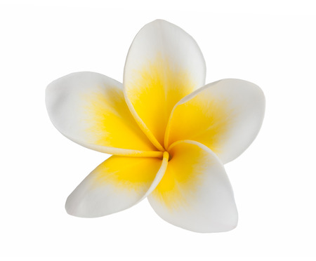 flores exoticas: Flor del Frangipani aislado en fondo blanco Foto de archivo