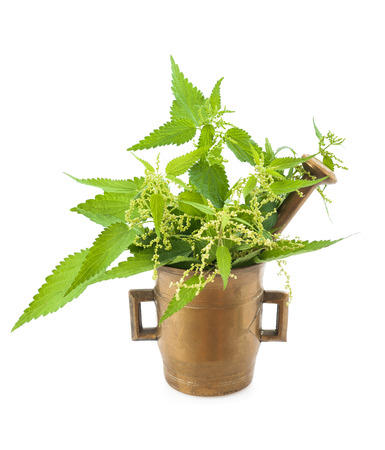 Wild nettles in a mortar with pestle isolated photo